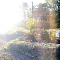 今日の我が家の庭20141018~初霜が降りました~
