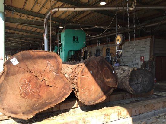 ブラックウォルナット巨木丸太を製材しました20170330-2