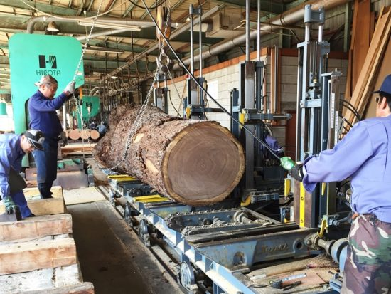 ブラックウォルナット巨木丸太を製材しました20170330-3