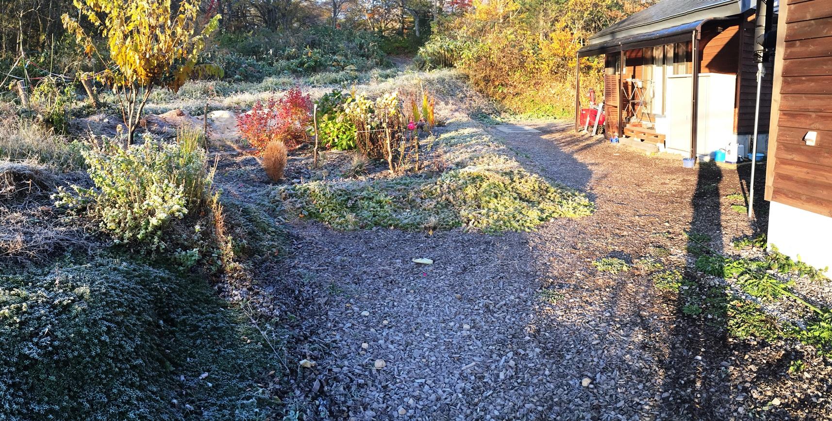 今日の我が家の庭20141029霜が降りました