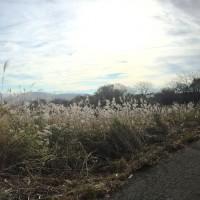 信州・黒姫高原今朝の散歩の風景・津南出張20141030