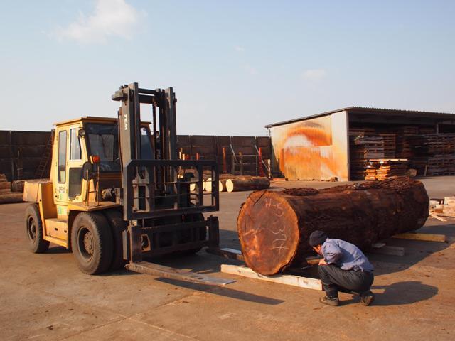 ブラックウォルナット巨大丸太製材20130308