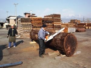 ブラックウォルナット巨大丸太製材2