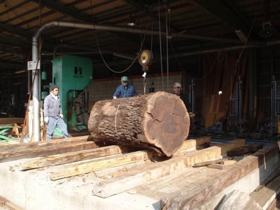 ブラックウォルナット巨大丸太製材6
