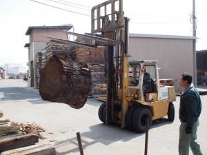ブラックウォルナット巨大丸太製材5