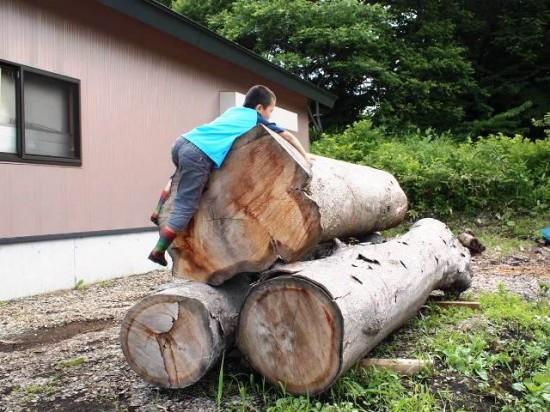 欅丸太に登る息子20130629