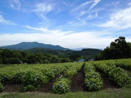 今日の散歩の風景20120726
