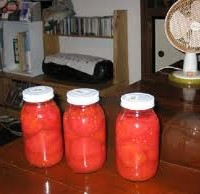 完熟トマトの瓶詰め!