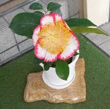 欅一枚板の花台。とっこやさんでご購入いただいたケヤキ耳付き板をご使用になり花台をご製作されました。3点の花台は全て、グラインダーとサンダーで磨かれ、水生ニスで仕上げられたそうです。3