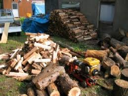 お客様から日当たりが悪かったために倒した杉の木の丸太をいただきました!  倒してから時が経ち、丸太の表面が痛んできていたので薪にすることにしました。