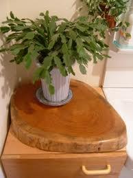 欅輪切り花台一番左の作品:我が家の流し台の横の収納BOX(これも自分が製作したものですが)の上においてあります。形も丸く、面取りというのですか?角々をマルクしてありますので温かみがあります。厚さは6センチあり、アンパンみたいです。